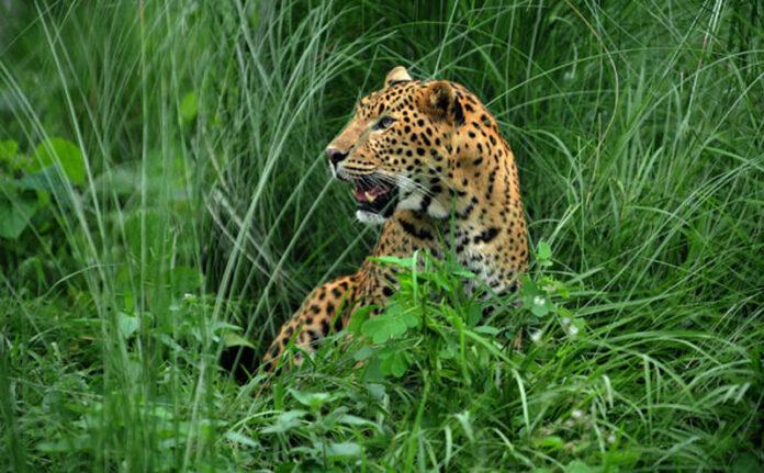 Leopard on Runway Shuts Down Nepal Airport