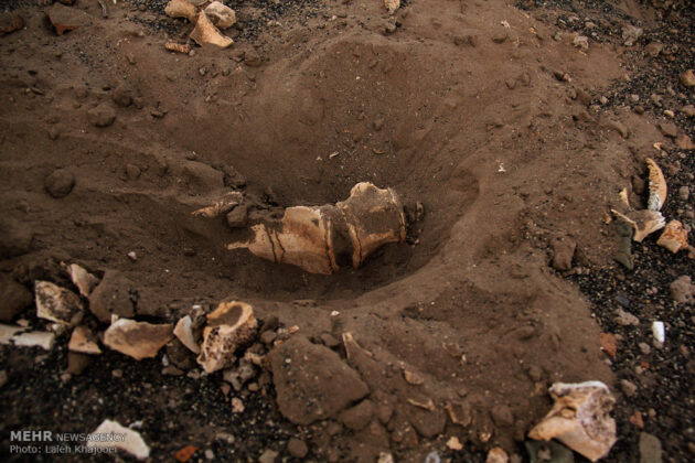 Sand Storm in Southern Iran Unearths Ancient City (11)