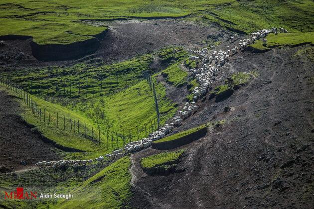 Spring in Baharestan, North of Iran (3)