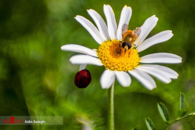 Spring in Baharestan, North of Iran (4)