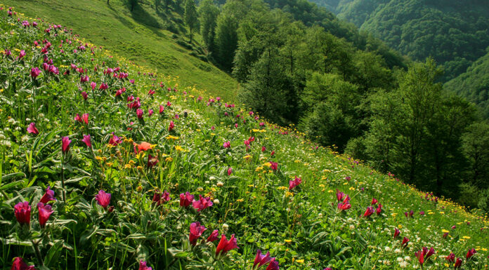 Spring in Baharestan, North of Iran (5)