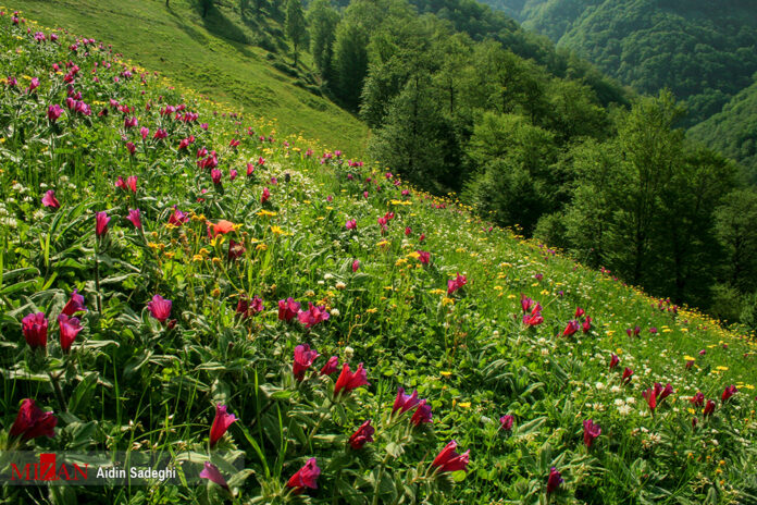 Spring in Baharestan, North of Iran (5)