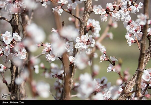 Early Days of Spring in Iran's Ardabil (11)