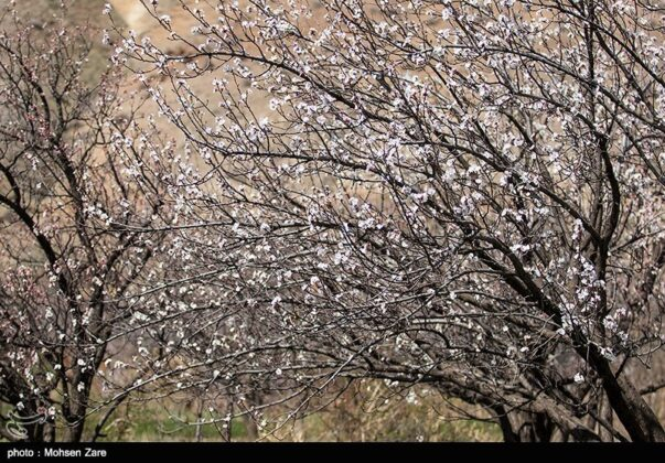 Early Days of Spring in Iran's Ardabil (7)