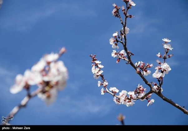 Early Days of Spring in Iran's Ardabil (8)