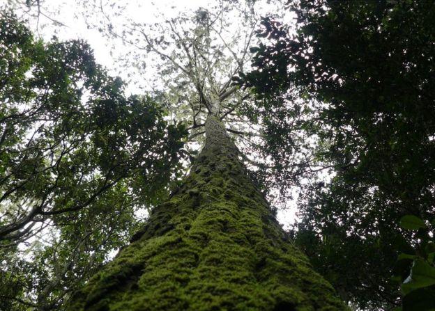 درختان روی زمین