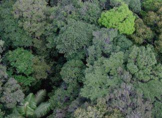 زمین 60 هزار گونه درختی دارد