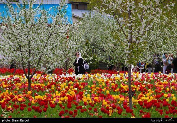 ایران .. أزهار التوليب1