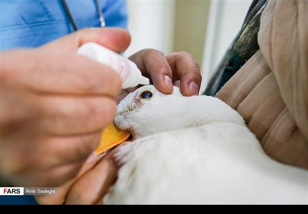 ايران .. جراحة إزالة الماء الأبيض من عين بطة 1