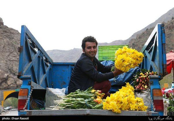 ایران .. أزهار التوليب15