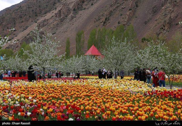 ایران .. أزهار التوليب18