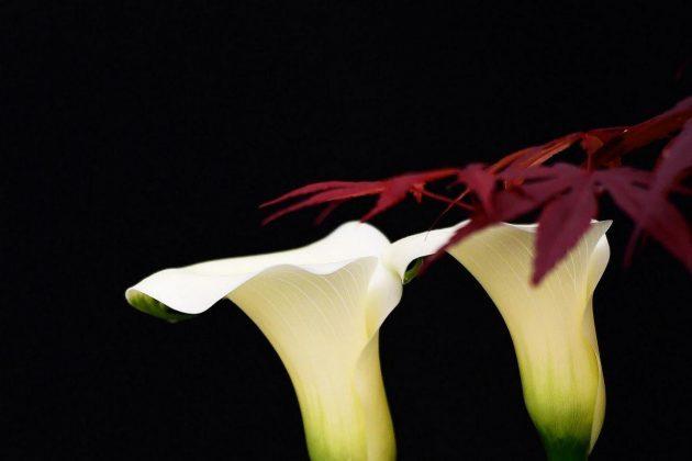 برگزاری نمایشگاه گل و گیاه در انگلیس2