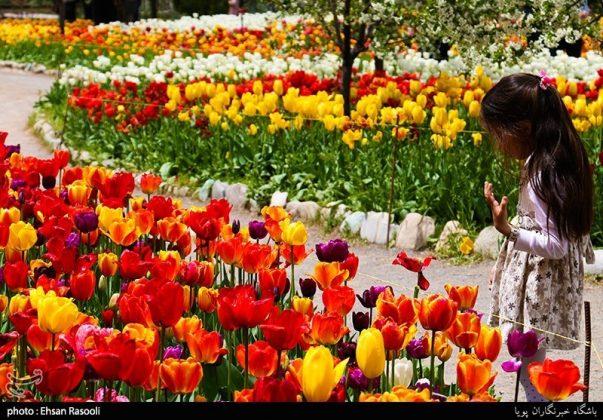 ایران .. أزهار التوليب20
