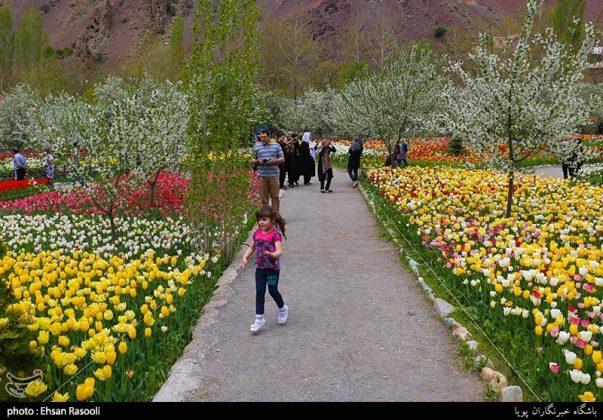 ایران .. أزهار التوليب21