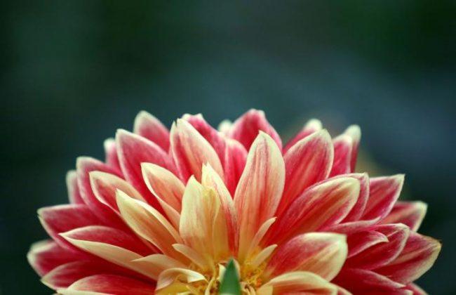 برگزاری نمایشگاه گل و گیاه در انگلیس3