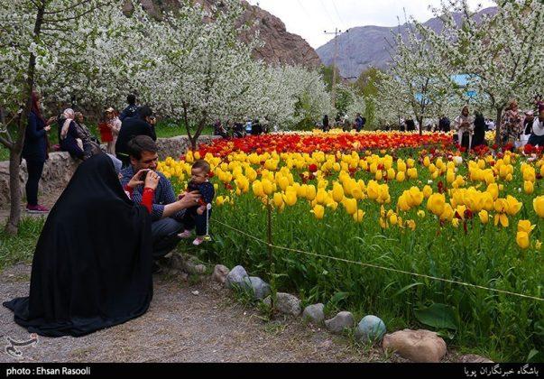 ایران .. أزهار التوليب3