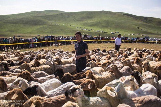 برپایی جشنواره فرهنگی ورزشی عشایر آذربایجان شرقی3