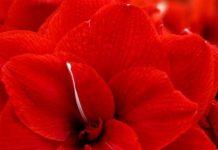 برگزاری نمایشگاه گل و گیاه در انگلیس