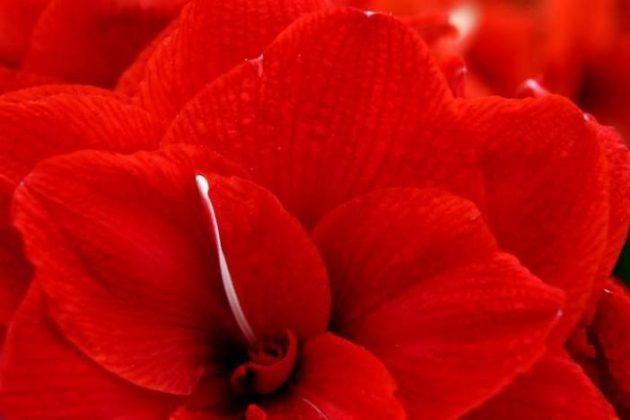 برگزاری نمایشگاه گل و گیاه در انگلیس5