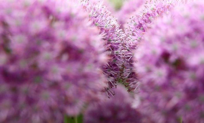 برگزاری نمایشگاه گل و گیاه در انگلیس6