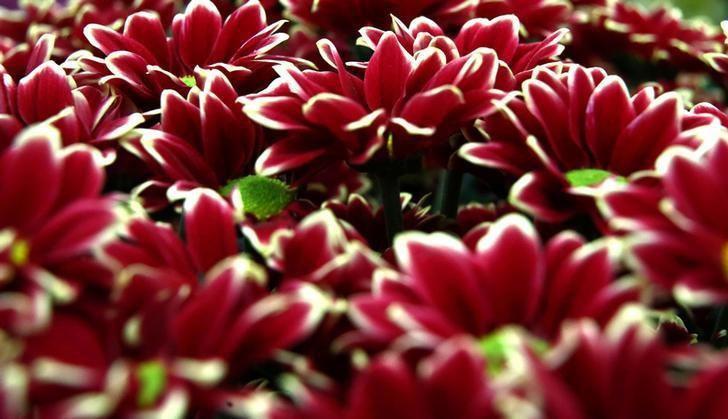 برگزاری نمایشگاه گل و گیاه در انگلیس7