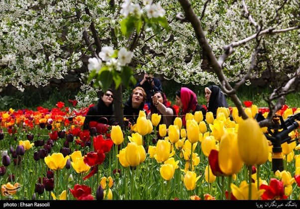 ایران .. أزهار التوليب8