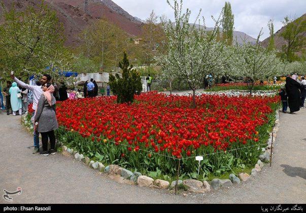 ایران .. أزهار التوليب9