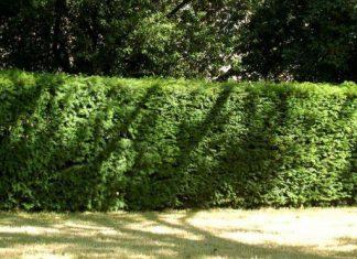 محیط شهرها بیشتر به گیاهان بوتهای نیاز دارد