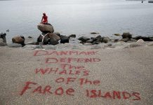 اعتراض عجیب فعالان محیط زیست به شکار نهنگها!