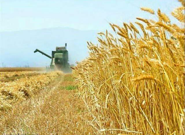 ايران تمدد حظر استيراد القمح اثر فائض المخزون