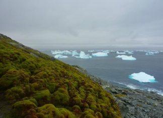 قطب جنوب در حال سبز شدن است!