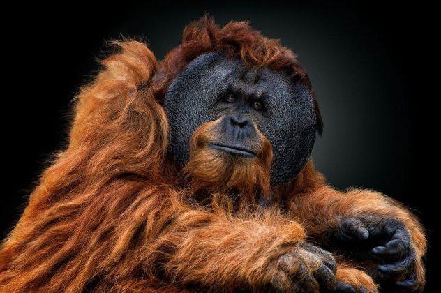 گزیدهای از تصاویر برتر هفته از نگاه «نشنال جئوگرافی»6