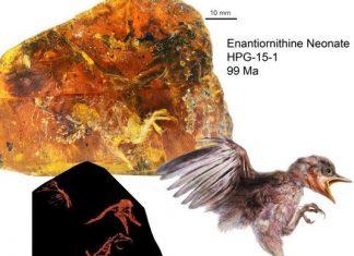کشف فسیل 99 میلیون ساله یک پرنده
