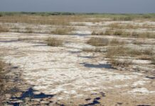 Iranians to Take Turkey to The Hague over Wetland Desiccation