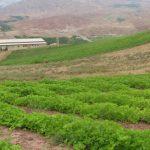 ايران ..ارتفاع الاستثمار الاجنبي في قطاع الزراعة لـ 300 ضعفا