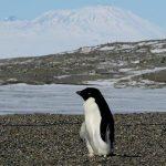 مگس، تهدیدی مهم برای قطب جنوب