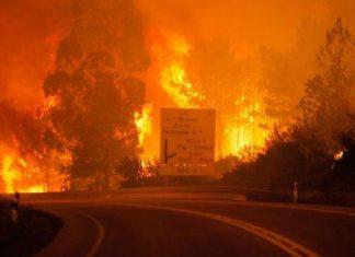 100 کشته و زخمی در «تراژیکترین» آتشسوزی جنگلهای پرتغال