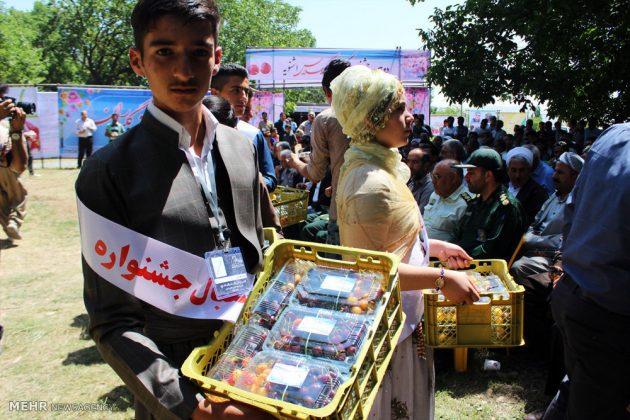 """مهرجان """"الكرز"""" في شمال غربي ايران10"""