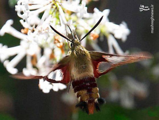 حشرات عجیب جهان10