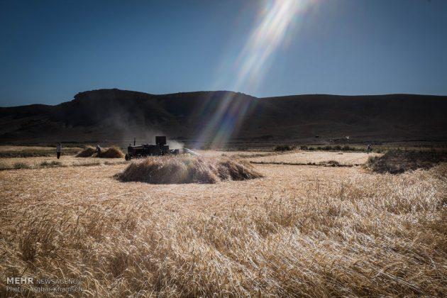 """حصاد القمح في قرية """"سُه"""" التاريخية باصفهان12"""