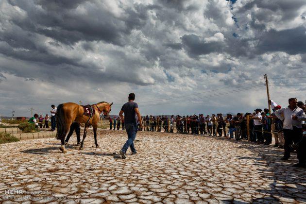 ایران .. سباق الخيل في آذربيجان الشرقية 19