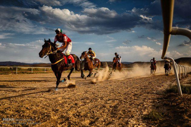 ایران .. سباق الخيل في آذربيجان الشرقية 4