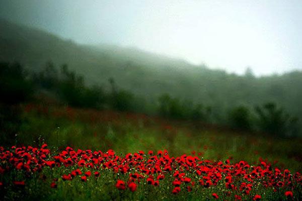 الطبيعة في ايران ..الجبل الأخضر فی آذربيجان الشرقية 5