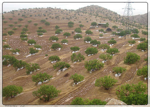 Millions of Hectares in Iran to Be Planted with Saplings
