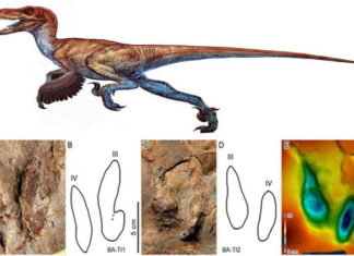 Traces of Feathered Dinosaur Found in Iran