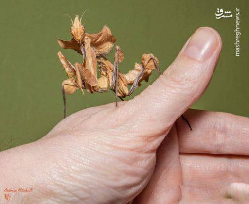 حشرات عجیب جهان7