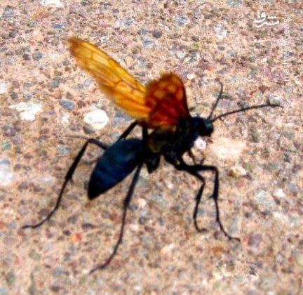 حشرات عجیب جهان8