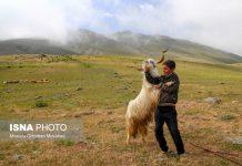 مصيف قوش غولو الساحر شمال غرب ايران 8
