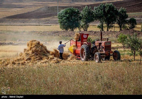 حصاد القمح في حقول شمال غرب إيران13
