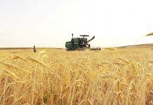 ايران .. مشتريات القمح المحلي 8.6 مليون طن